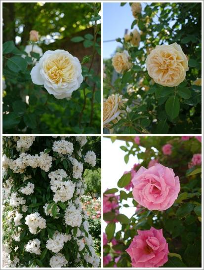 花フェスタ記念公園2015 ⑦_b0142989_17494686.jpg