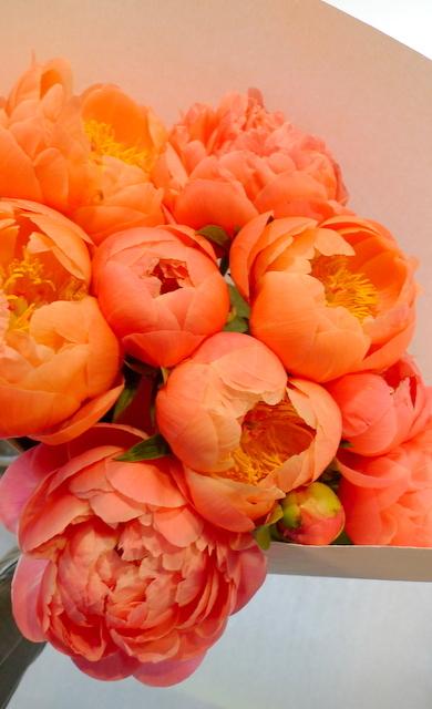 シャクヤクのみの花束。_b0171193_00192005.jpg