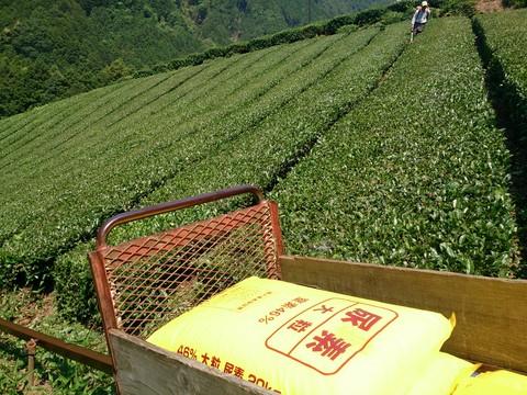 2番茶収穫前の作業_b0028299_21202199.jpg