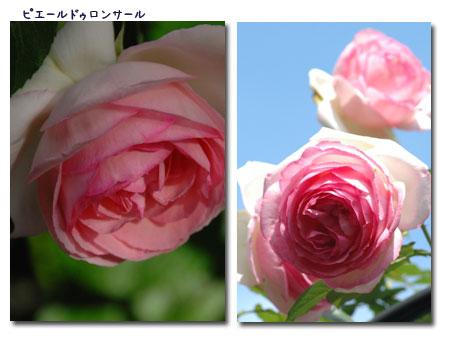 c0051105_1364952.jpg