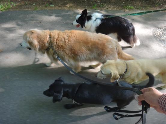 散歩の行きはのんびり帰りは急ぐ_f0064906_1514944.jpg