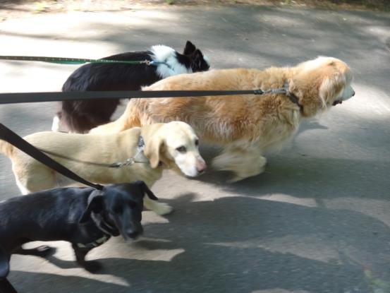 散歩の行きはのんびり帰りは急ぐ_f0064906_1555441.jpg