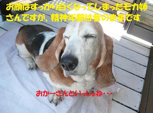 f0121712_13363688.jpg