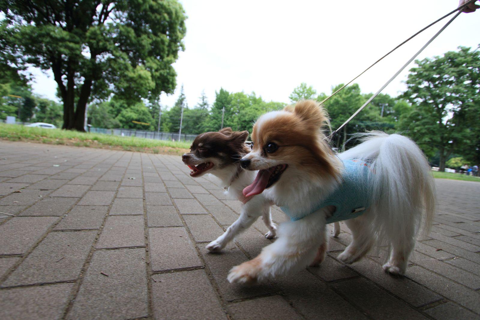 超広角のお散歩_a0027126_1131033.jpg