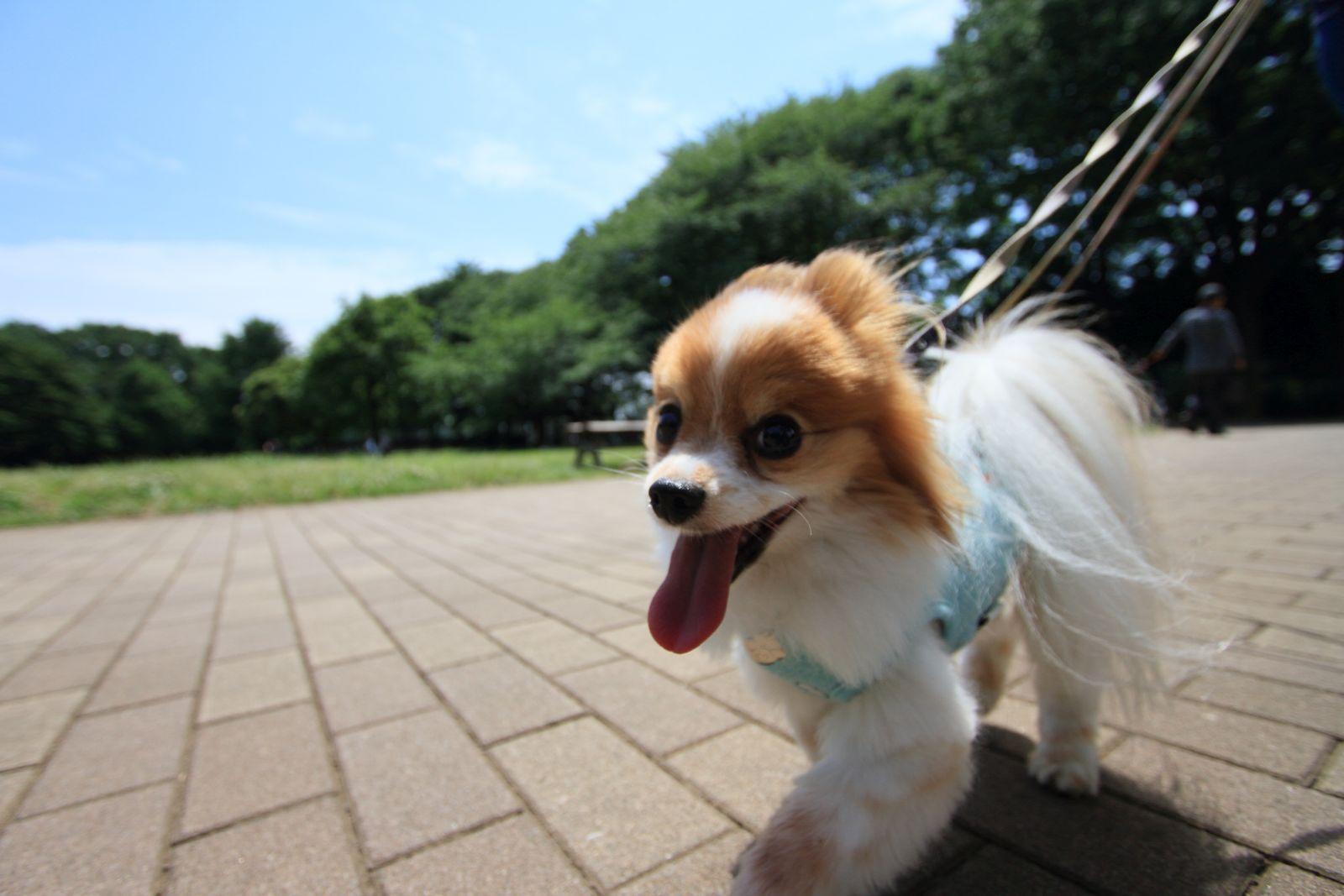 超広角のお散歩_a0027126_1135732.jpg