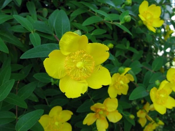 初夏の庭_f0129726_21391191.jpg