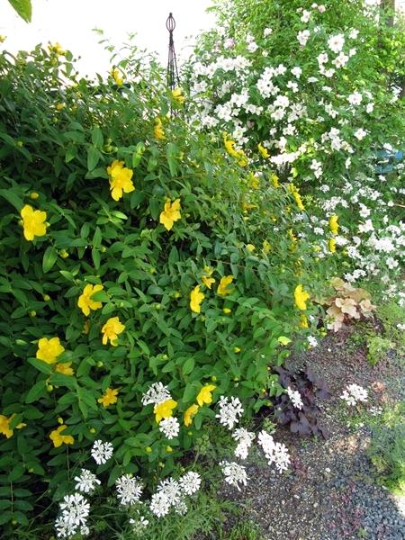 初夏の庭_f0129726_21395442.jpg
