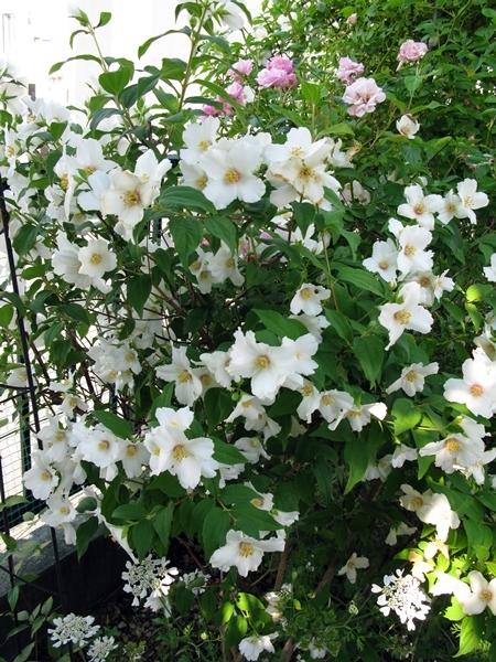 初夏の庭_f0129726_21424174.jpg