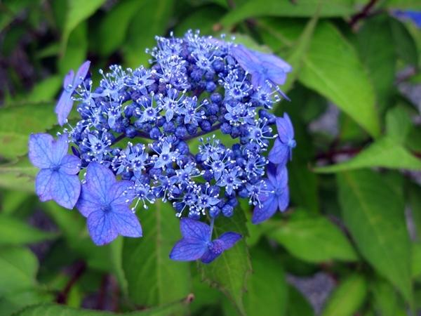 初夏の庭_f0129726_21492423.jpg