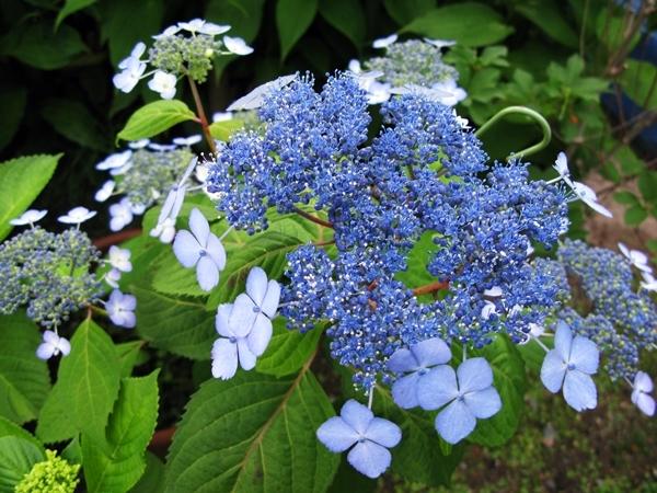 初夏の庭_f0129726_21551126.jpg