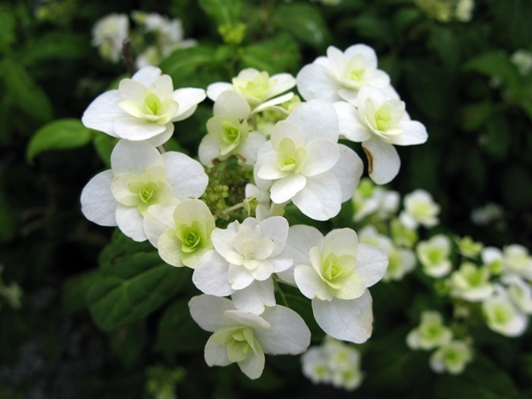 初夏の庭_f0129726_22005195.jpg