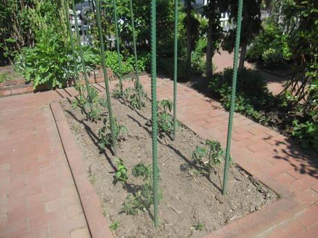 ポタジェに苗を全部植えた_a0279743_14481847.jpg