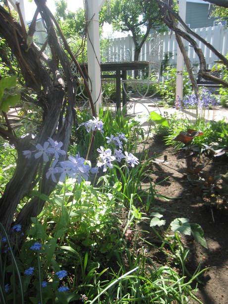 ポタジェに苗を全部植えた_a0279743_14491828.jpg