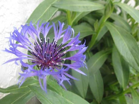 ポタジェに苗を全部植えた_a0279743_14511218.jpg