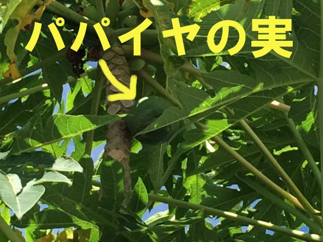 5月27日 梅雨の合間の青空です。_b0158746_16174370.jpg