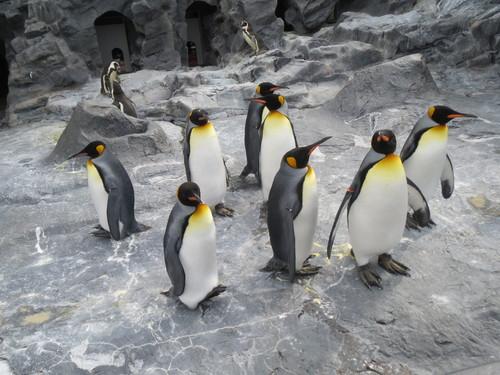 札幌その五 旭山動物園・・・_a0160153_0175148.jpg