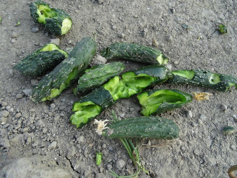 西本クリニック通院 & 夏野菜にネット張り_c0108460_21040714.jpg