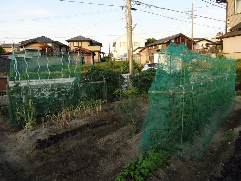 西本クリニック通院 & 夏野菜にネット張り_c0108460_21120721.jpg