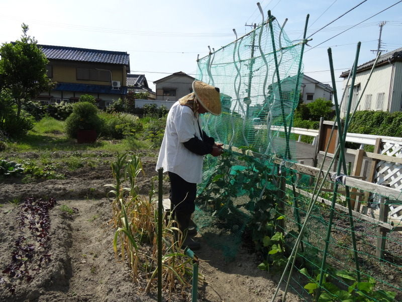 西本クリニック通院 & 夏野菜にネット張り_c0108460_21121606.jpg