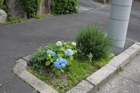 庭の花飾ろ♪_a0263675_025593.jpg