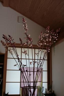庭の花飾ろ♪_a0263675_032247.jpg