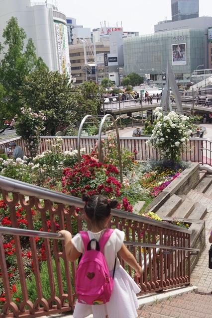 保育園児の可愛い散歩の列に車が突っ込む、2児が死亡・・・大津市での悲劇_d0181492_2233319.jpg