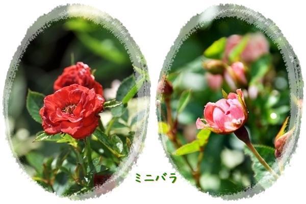 f0176499_14534853.jpg