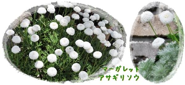 f0176499_14540251.jpg