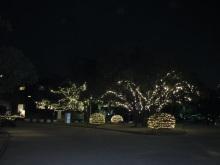 暖かな冬の夜_e0344611_23040468.jpg