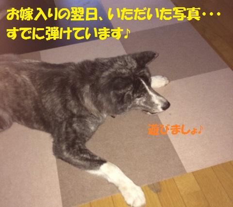 f0121712_1555412.jpg