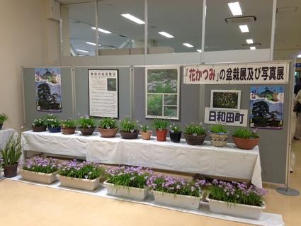 『 郡山市の花  はなかつみ 』_f0259324_18473550.jpg