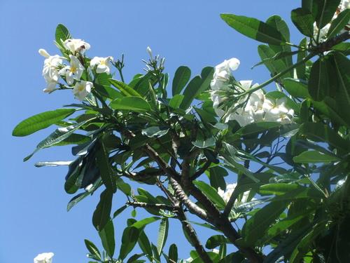 花の綺麗な..ハワイ!_b0137932_6584757.jpg