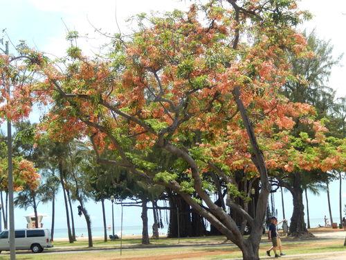 花の綺麗な..ハワイ!_b0137932_7454388.jpg