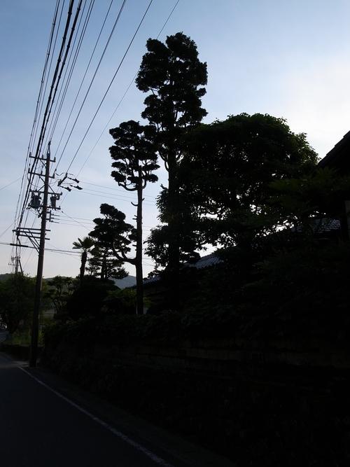 b0036636_193091.jpg