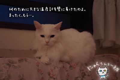 ミミちゃん 四月三十日_e0031853_21142872.jpg