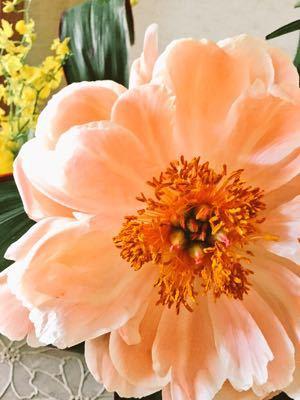 オレンジ色のシャクヤク⁉︎_e0086864_12484122.jpg