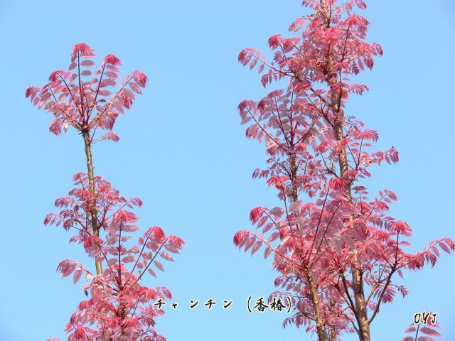 f0166871_1757493.jpg