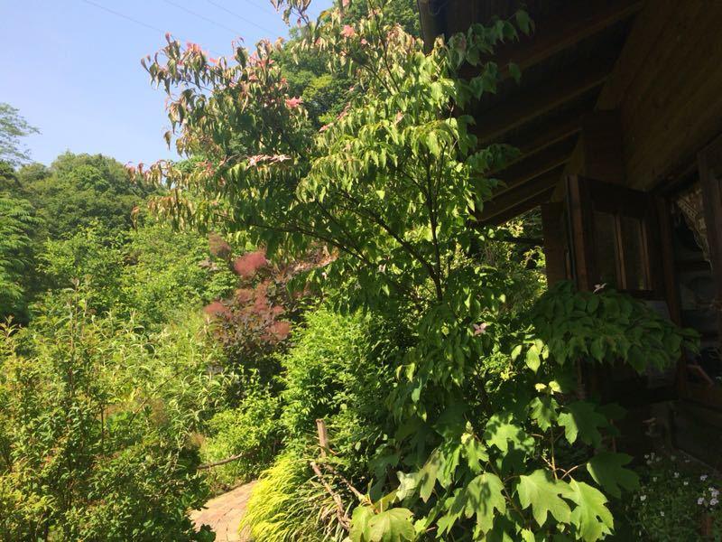 ターシャ・チューダーの庭(花フェスタ記念公園)_e0233674_1724294.jpg