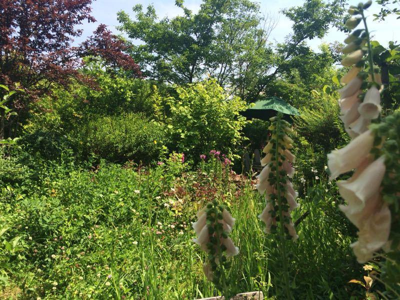 ターシャ・チューダーの庭(花フェスタ記念公園)_e0233674_1724322.jpg