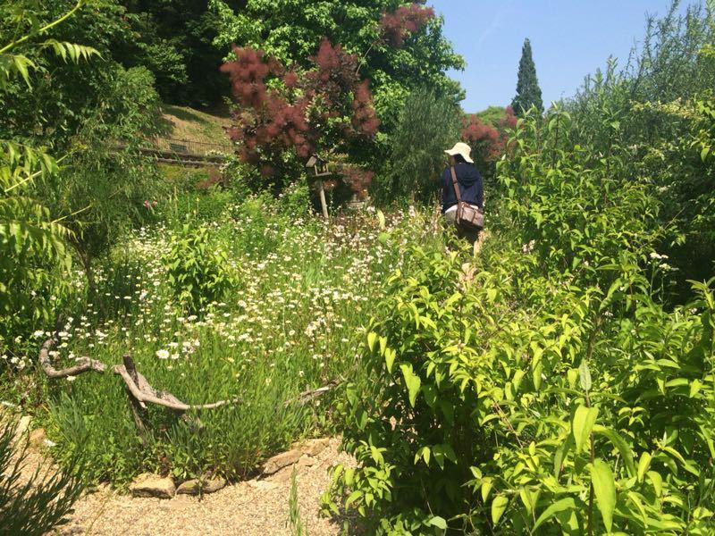 ターシャ・チューダーの庭(花フェスタ記念公園)_e0233674_1725523.jpg