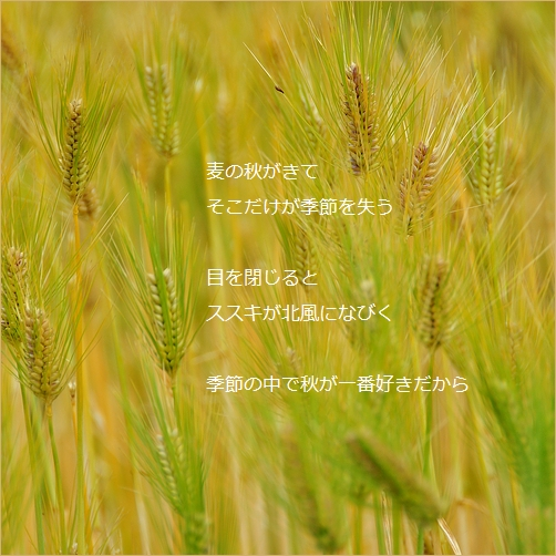 b0154475_215054100.jpg