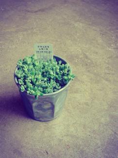 今週の鉢物さん_b0209477_158799.jpg