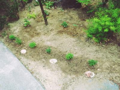 ama terrasse 野菜はじめました_e0120789_17192281.jpg