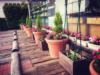 ama terrasse 野菜はじめました_e0120789_17210690.jpg