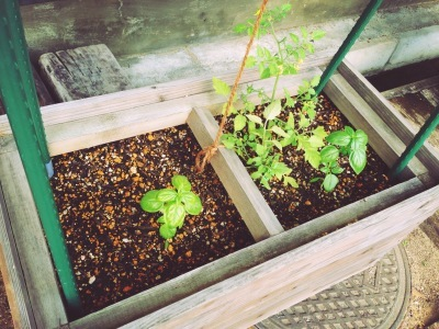 ama terrasse 野菜はじめました_e0120789_17215669.jpg