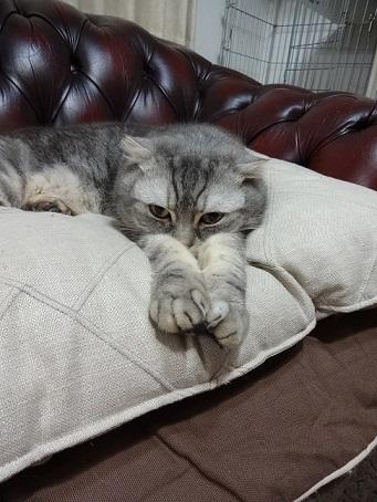 徒長しない派と猫。。_c0178104_08261659.jpg