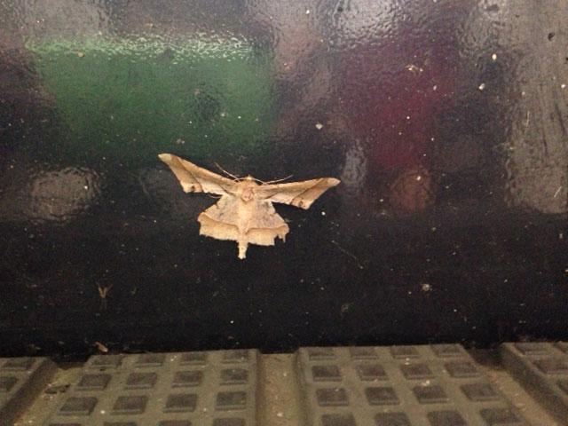 虫の集合場所になっている我が家の玄関にて_b0025008_8553485.jpg