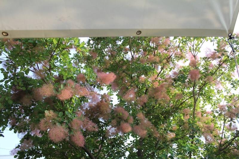 今朝の庭_b0132338_07492797.jpg