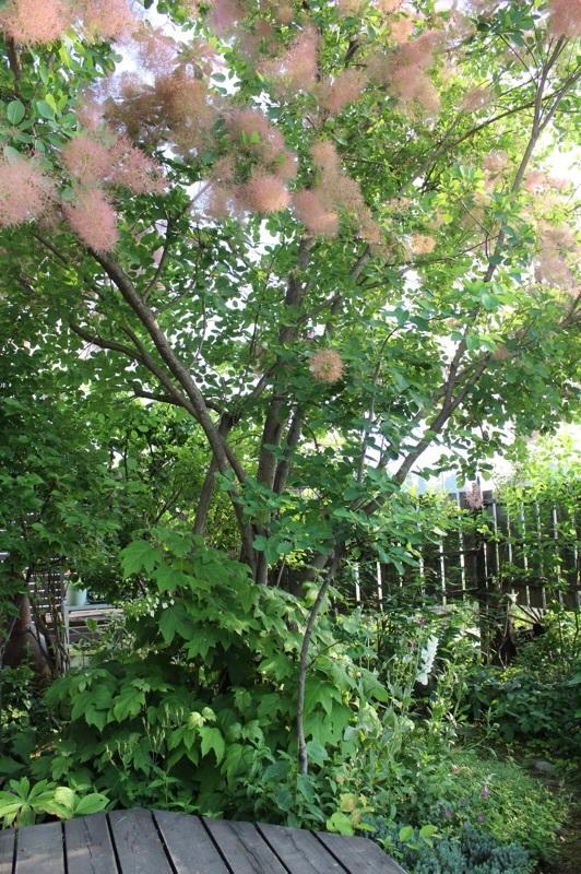 今朝の庭_b0132338_07493201.jpg