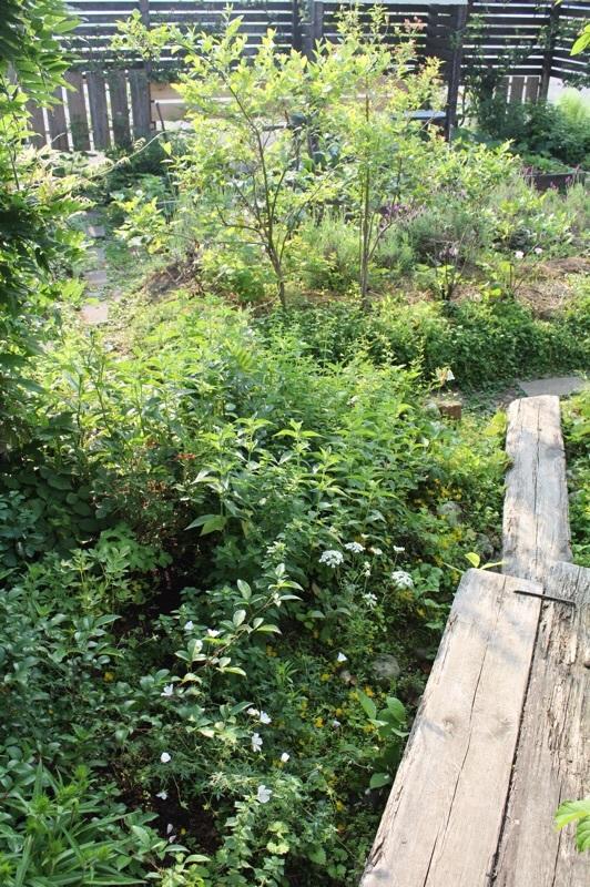 今朝の庭_b0132338_07493874.jpg